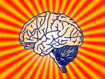 Das Gehirn...
